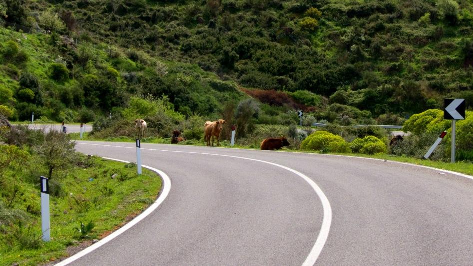 Kor på vägen