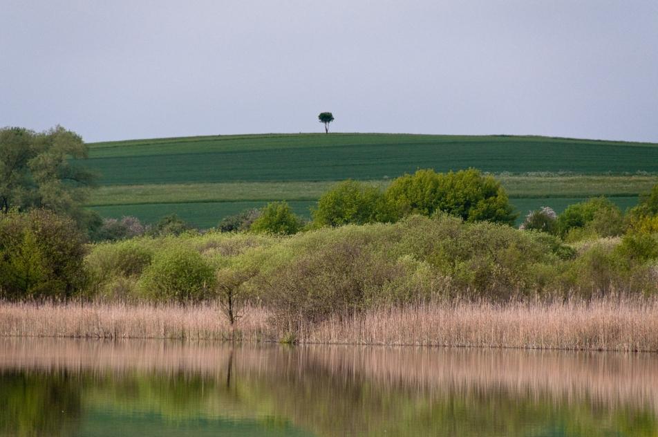 mindelsee bodensjön bodensee lake constance