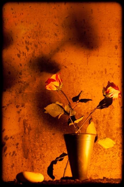Blommor på Skogskyrkogården, allhelgona
