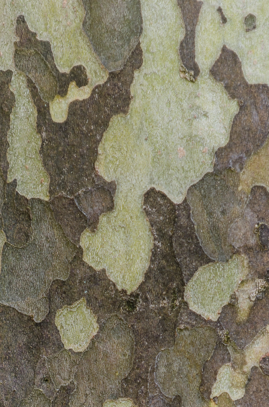 Kamouflageträd