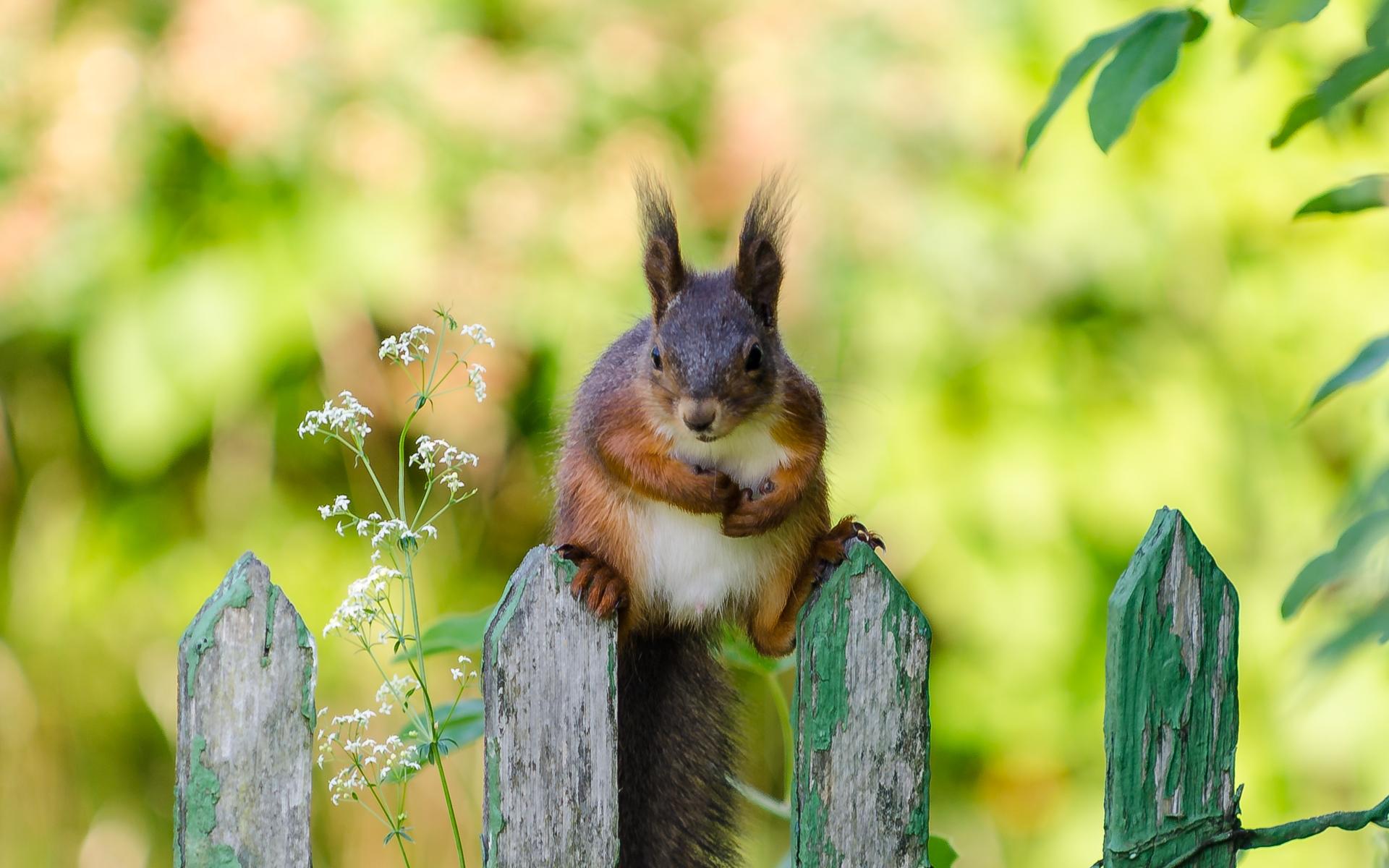 *Hej! Jag kan sitta såhär hela dan! Kan jag få din müsli? Vad heter du? Har du en nagelsax?* Blir tokig.