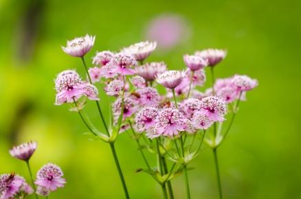 Nån blommajävel