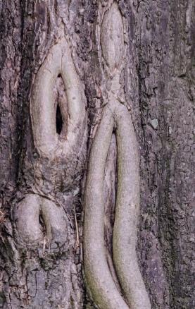 Tankeväckande stam