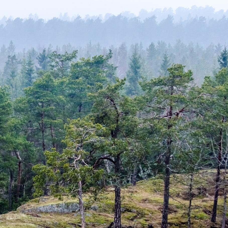Skogsupplevelse