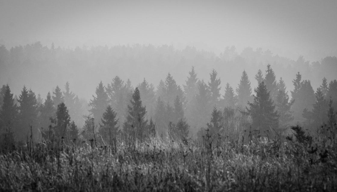 Utsikt mot Kvarnsjön
