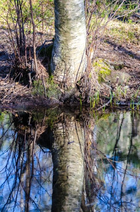 Spegling i skogen