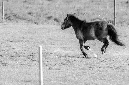 Ett djur jag kan namnet på - häst!