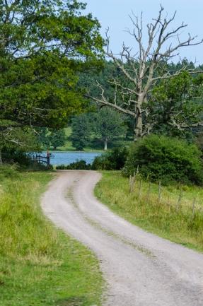 Vägen genom Segersgärde naturreservat