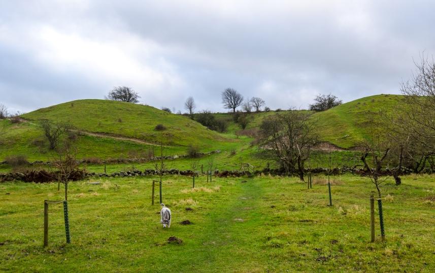 Brösarps backar visade sig bestå av kullar