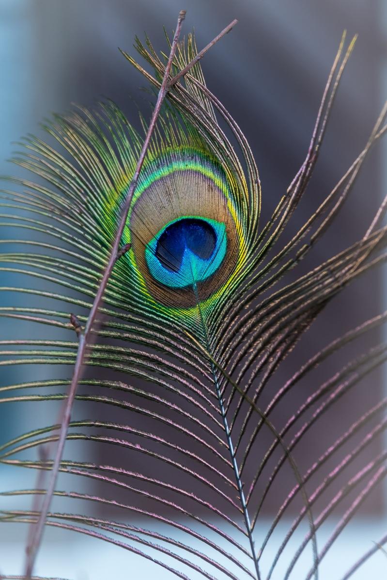 Påfågelpåskpynt på Mårbacka