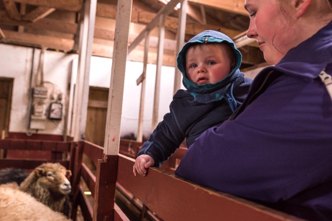 Petur och Kath ser på får