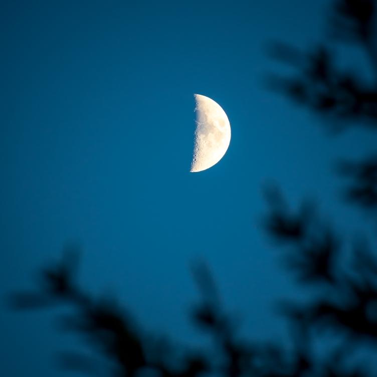 Halvmåne