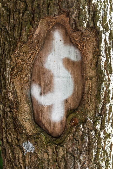 Där pengar växer på träd