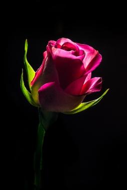 Samma ros