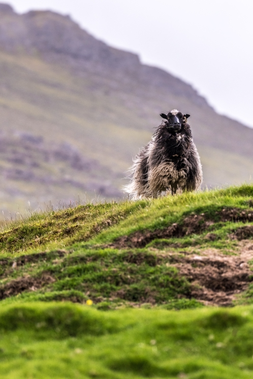 Faroe_islands_july_2017_DHK2681