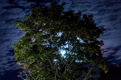 Låg fullmåne