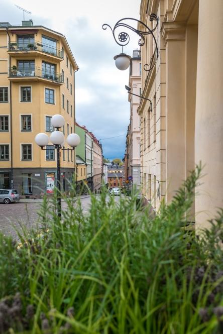 Hökens gata