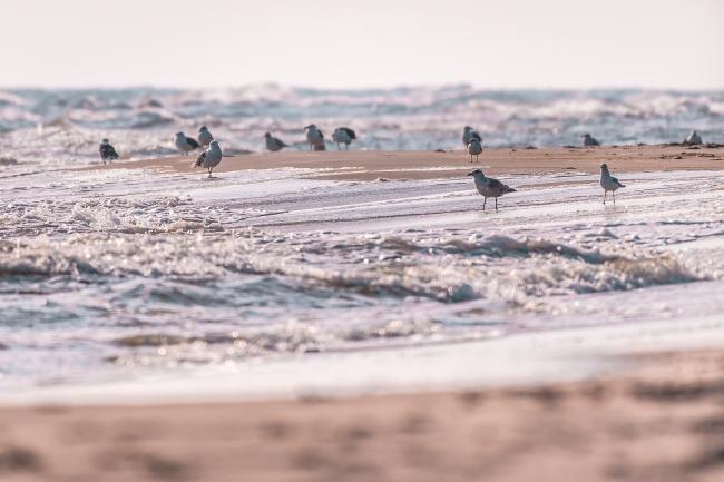 Jåglar