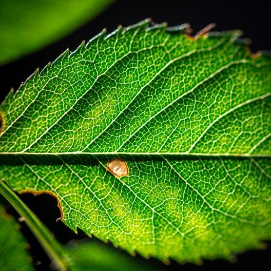 Roslagens sista grönska
