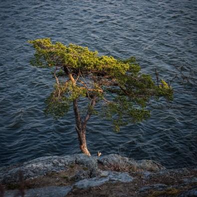 Trädet har en namnskylt